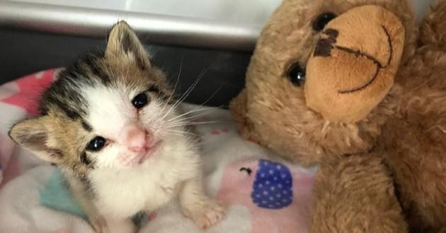 Ils sauvent un chaton et changent sa vie grâce à une peluche