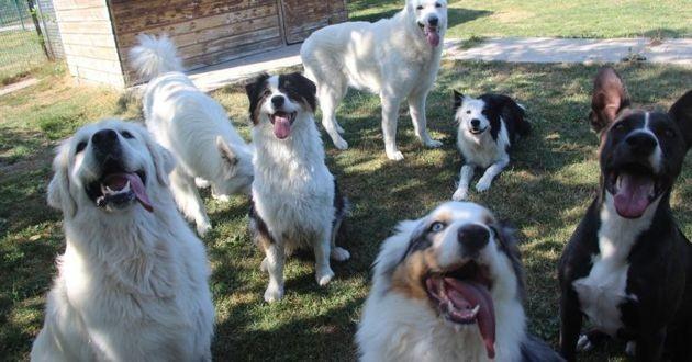 pension chiens