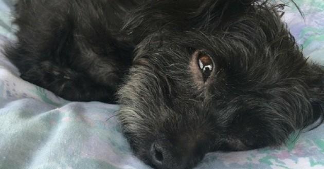Pepette chienne adoptée SPA