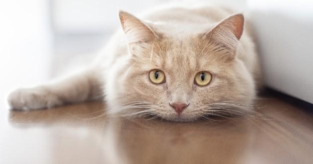 comment le chat perçoit le monde