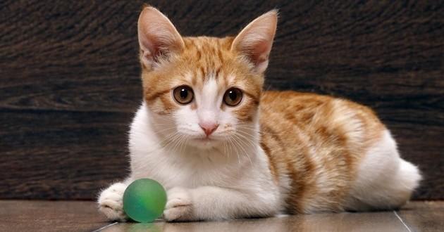 chaton balle jeu