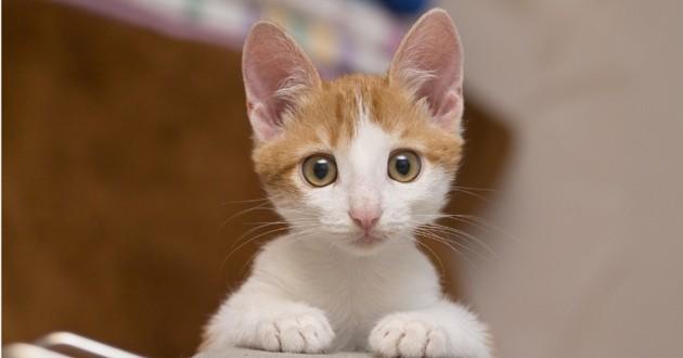au japon un petit chaton errant se d brouille tout seul pour se faire adopter insolite wamiz. Black Bedroom Furniture Sets. Home Design Ideas