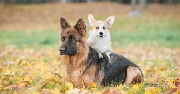 petit grand chien