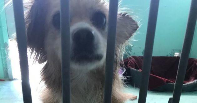 un chien dans un enclos de refuge