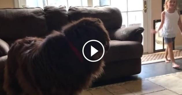 chien ninja noir