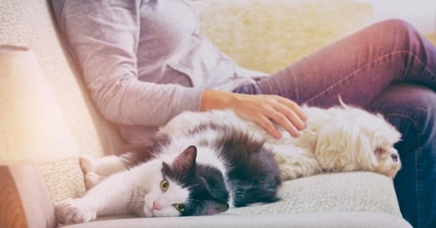 femme sur un canapé avec son chien et son chat