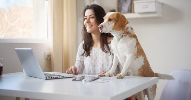 chien au travail