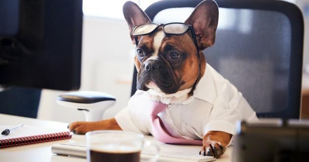 chien au travail petsatwork