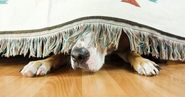 chien peur de tout