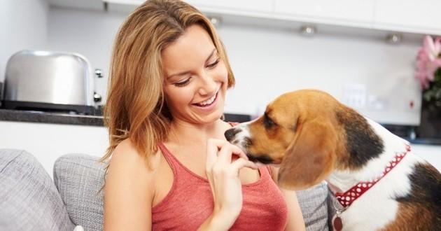 chien adoption