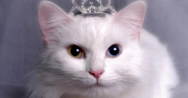 """Les perles du véto : """"le dépucelage de chat"""""""