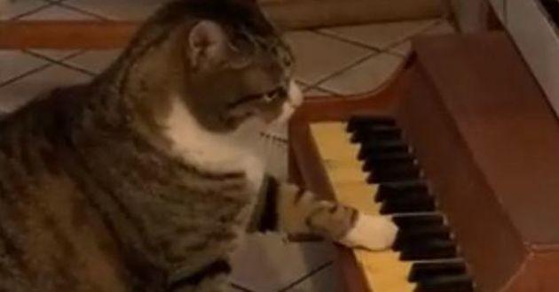 chat qui joue au piano