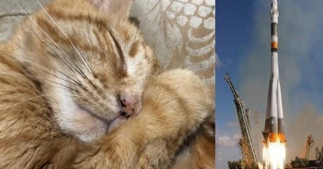 Cet ancien employé de la NASA veut envoyer les cendres de son chat dans l'espace