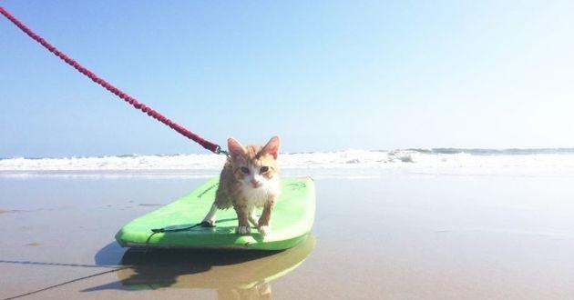 Pip le chat sur une planche