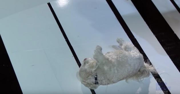 Le chien de Glenn Close lui a volé la vedette aux Independent Spirit Awards