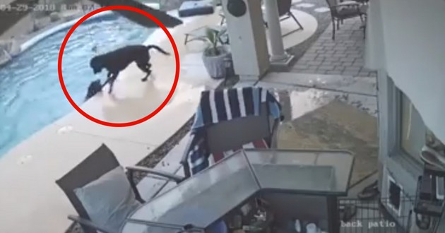chien sauve ami piscine