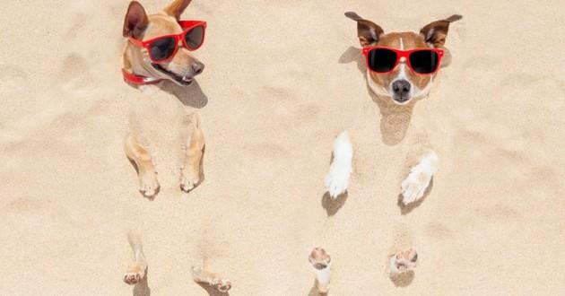 chiens enfouis dans le sable