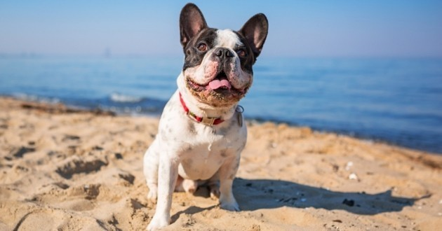 Plages autorisées aux chiens 2016