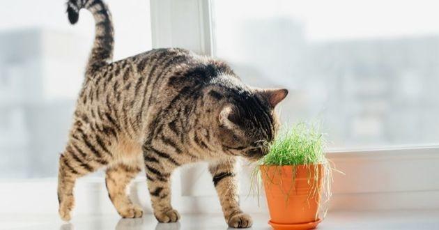 chat qui renifle une plante