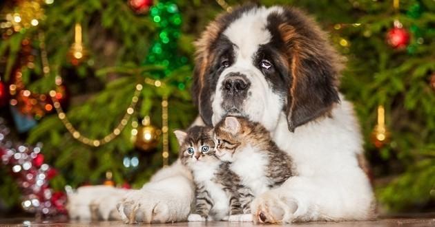 chat chien plantes noël