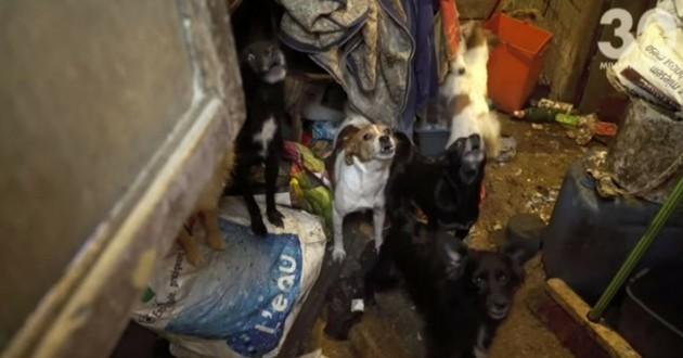 chiens plouezec maltraitance