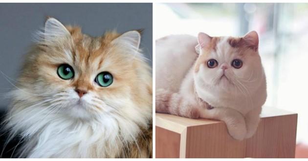 plus beaux chats instagram