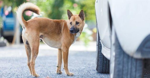 chien près d'un pneu de voiture