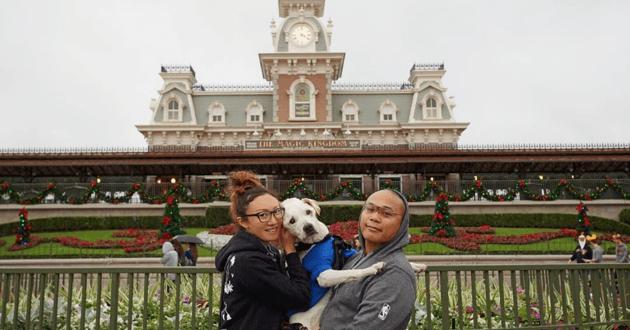 Sachant son chien condamné, ce couple lui a offert le plus beau des voyages à travers les Etats-Unis