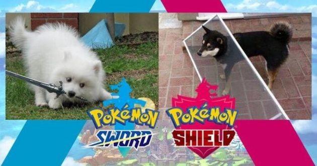 Pokémon Sword et Shield avec des chiens
