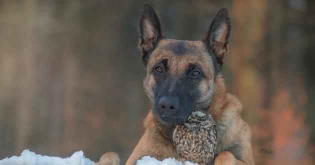 chien et chouette