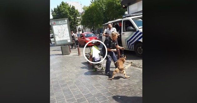 chien police coups