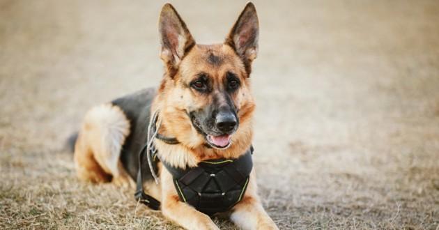 chien de police