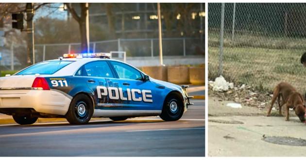 police voiture chien