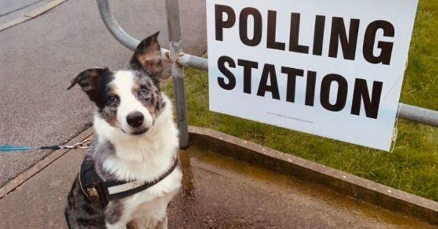 un chien au bureau de vote