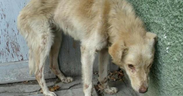pollux chien association rev'animal