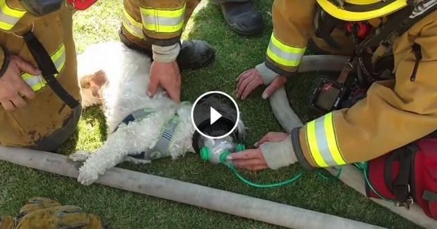pompiers incendie chien masque oxygene