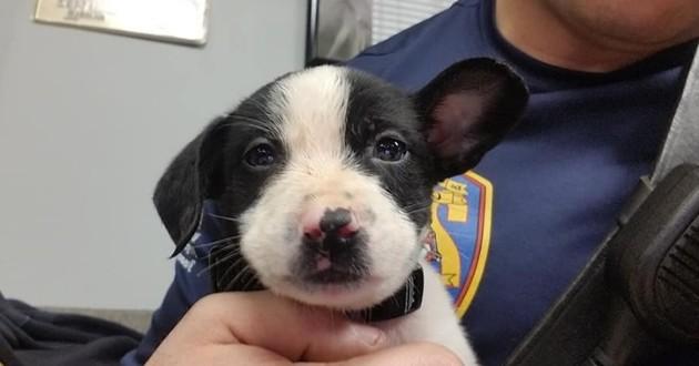 Ce pompier a sauvé à deux reprises ce chien (mais pas de la façon à laquelle vous pensez)
