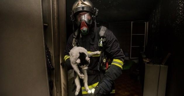 chats sauvés d'un incendie