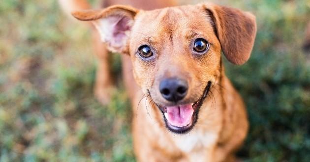 chien adopté SPA