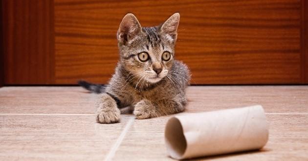 Comment prendre soin du système urinaire de son chat ?