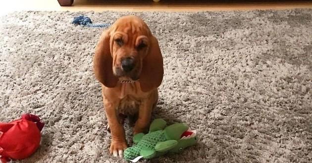 detective prince chien police
