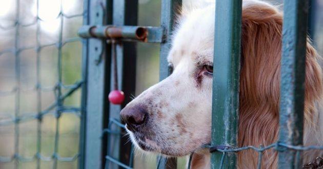 un chien derrière des barreaux