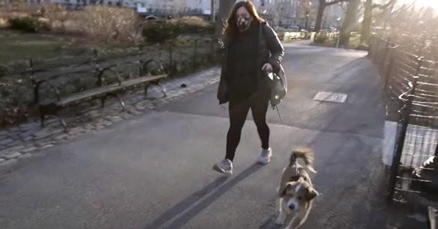 promenade dans un parc