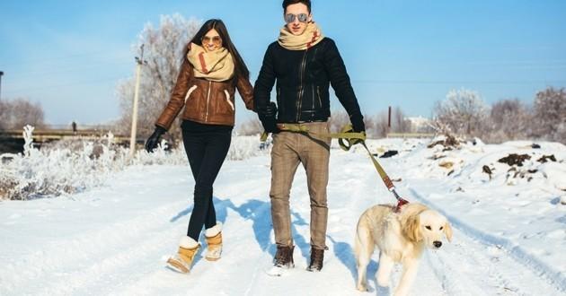 promenade chien hiver