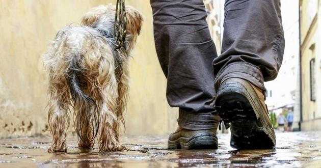 chien promenade pluie