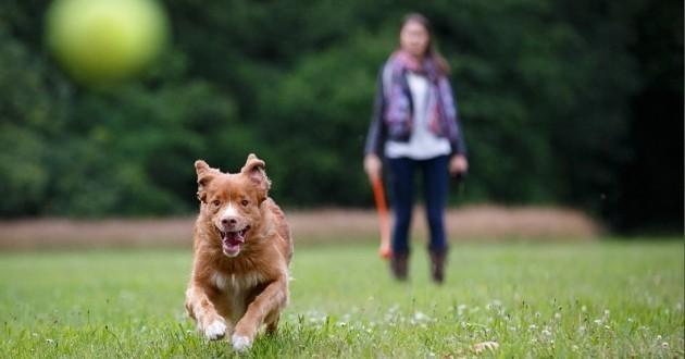 Promener son chien : comment rendre ce moment parfait ?