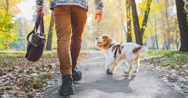 promener son chien sans laisse