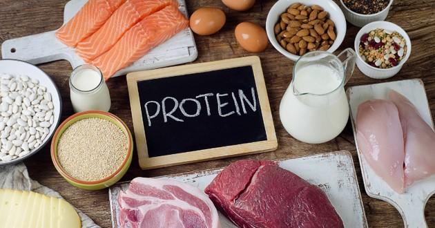 Les protéines dans l'alimentation du chien