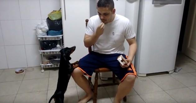 chien médicament