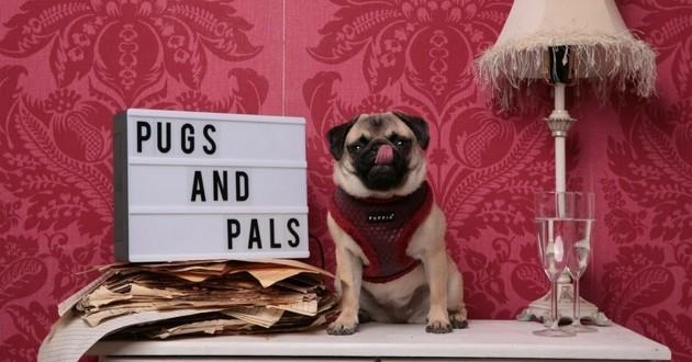 Pugs & Pals café carlins